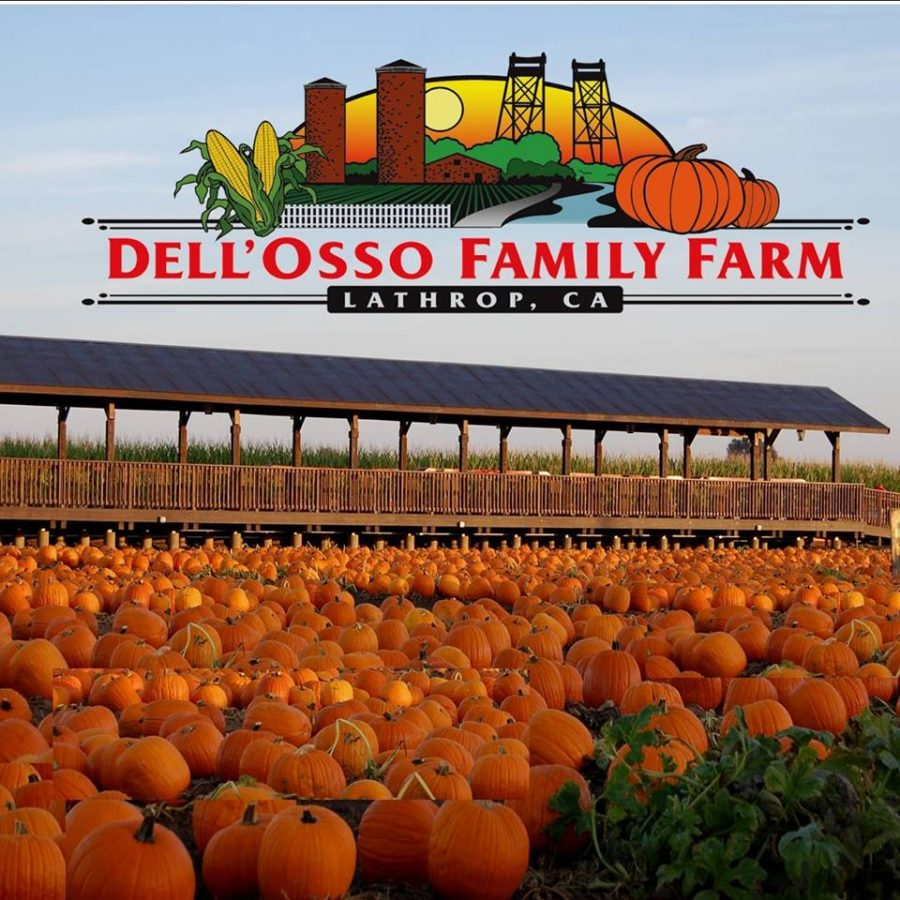 Dell%27Osso+Family+Farm+doing+holiday+fun+since+1997.+