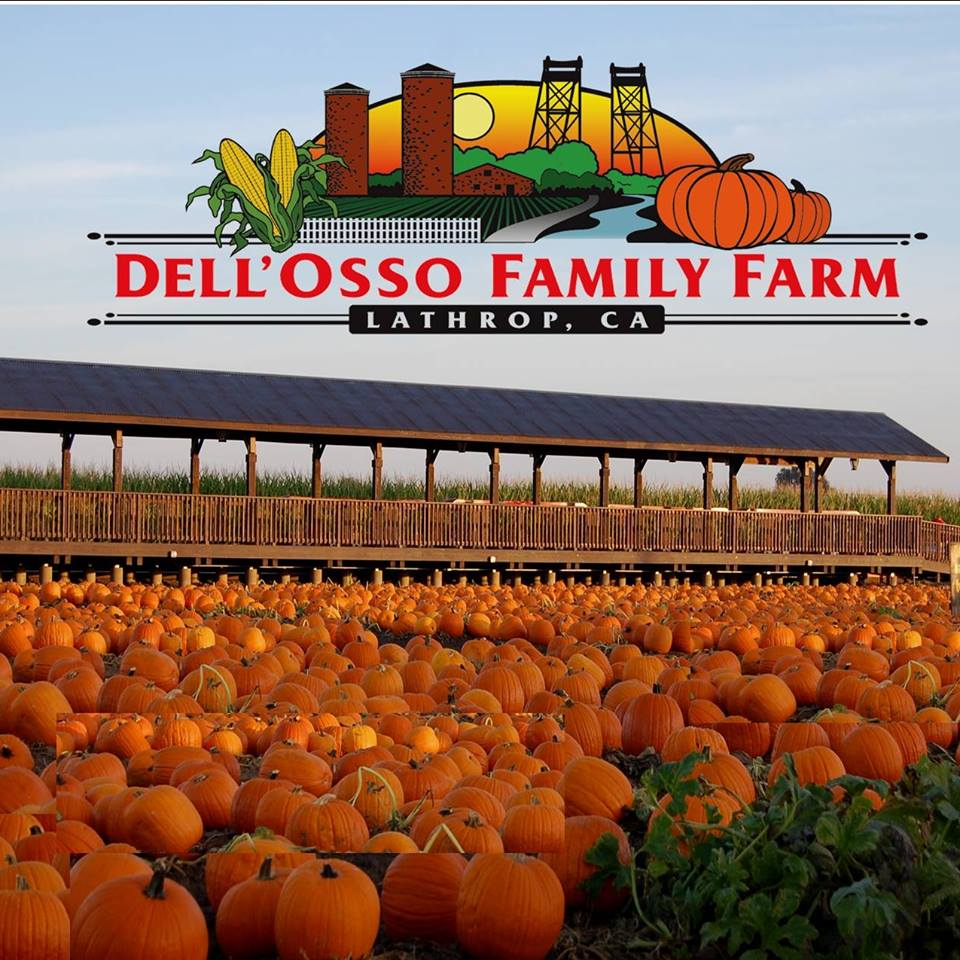 Dell'Osso Family Farm doing holiday fun since 1997.